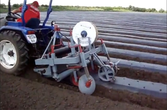 агротехника выращивания клубники