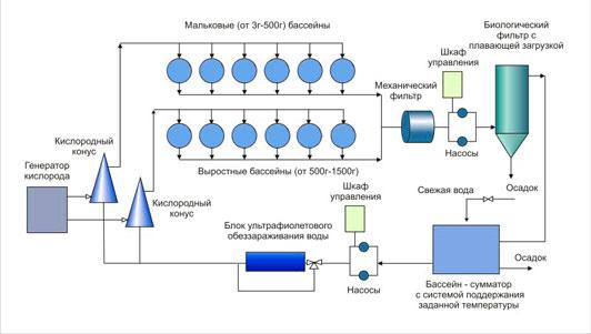 схема узв для разведения осетров