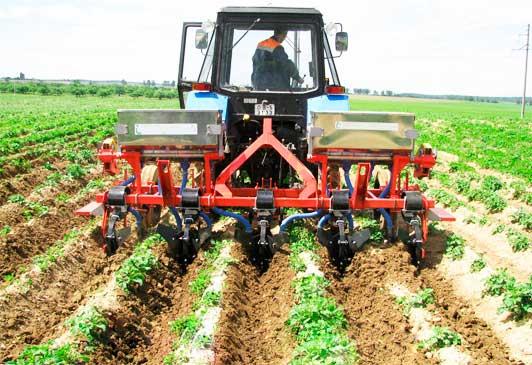Выращивание картофеля бизнес